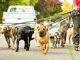 www.milanuncios.com anuncios-en-galicia cuidador-perros.htm