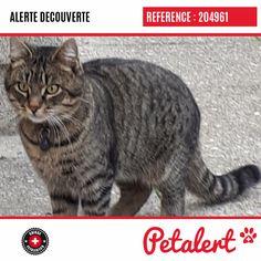 Cette Alerte (204961) est désormais close : elle n'est donc plus visible sur la plate-forme Petalert Suisse. Cette Alerte est échue automatiquement depuis le 04.02.2020 Merci pour votre aide. Visible, Aide, Cats, Switzerland, Thanks, Shape, Animaux, Gatos, Cat