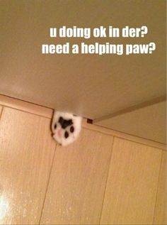 Attack Of The Funny Animals - 38 Pics