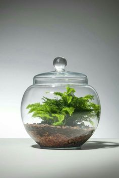 80 Awesome Bonsai Terrarium in the Jars Ideas https://decomg.com/80-awesome-bonsai-terrarium-jars-ideas/