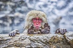 The Affinity Photo People's Choice Award :: Comedy Wildlife Photography Awards - Conservation through Competition Funny Animal Photos, Funny Photos, Funny Animals, Funniest Photos, Funniest Animals, Photography Essentials, Photography Awards, Funny Photography, Nature Photography