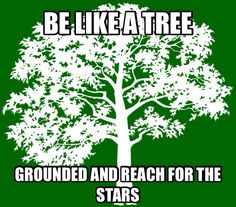 Be like a tree! Grounded and reach for the stars. Reaching For The Stars, Food For Thought, Herbs, Herb