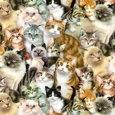 These cute kittens will warm your heart. Cats are amazing companions. Cute Kittens, Cats And Kittens, Cats 101, Cats Meowing, Pretty Cats, Beautiful Cats, Image Chat, Cat Fabric, Cat Wallpaper