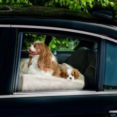 Companion Pet Car Seat