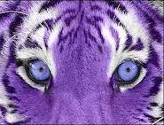 A purple lion