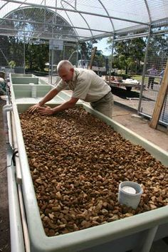 Aquaculture systems aquaponic farming business,aquaponic gardening diy aquaponic solutions,balcony aquaponics system diy hydroponics with fish. Aquaponics Greenhouse, Aquaponics Fish, Fish Farming, Aquaponics System, Hydroponic Gardening, Organic Gardening, Backyard Greenhouse, Greenhouse Ideas, Vegetable Gardening