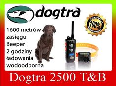 DOGTRA 2500 T&B www.pologar.pl