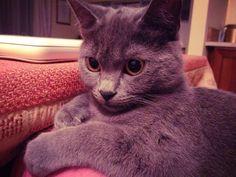 My cat Regina