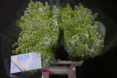 #Lilac #Stepman: Availalbe at www.barendsen.nl