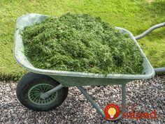 Hovorí sa, že dobrý záhradkár zužitkuje všetko, čo mu príroda poskytla a nič nevyjde nazmar. Skúsený pestovateľ sa podelil o jednoduchý, no o to užitočnejší dôvod, prečo nikdy nevyhadzuje pokosenú trávu