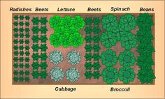 Growing The Home Garden: Fall Vegetable Garden Layout for a 4'x8' Raised Bed