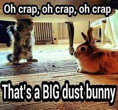 Wow! That IS a big dust bunny! #rabbit #bunny #bunnies #pets #cuteanimals