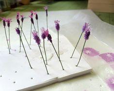 flowersoft_stems_032016