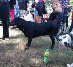 Love that photobombing dog! Visit Waverider @ http://www.waveridermp3.com/mood-elevator-isochronic-mp3/  #photobomb #bwe