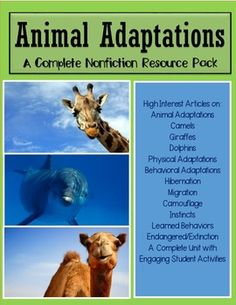 This mega pack focuses on Animal Adaptations through the use of high interest informational articles in kid-friendly language. The main skills and concepts of this unit focus on:Animal AdaptationsPhysical AdaptationsBehavioral AdaptationsHibernationMigrationCamouflageInstincts Learned BehaviorsEndangered and ExtinctionWith Case Studies on Camels, Giraffes, and DolphinsThis complete unit comes with many engaging student activities!