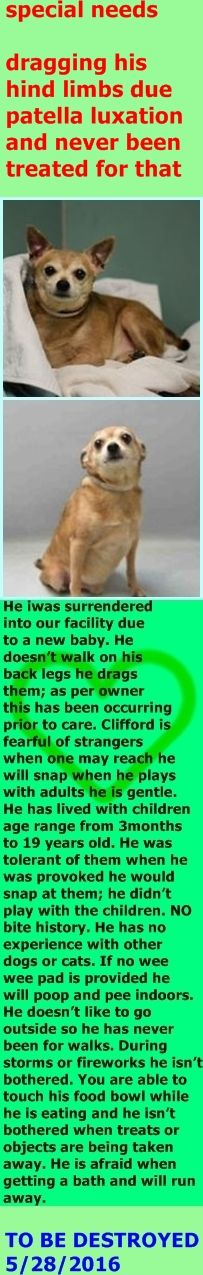 RETURNED 06/14/16 SUPER URGENT Brooklyn Center NYC ADOPT SPECIAL NEEDS SENIOR DOG CLIFFORD – A1074898 MALE, TAN / WHITE, CHIHUAHUA SH MIX, 10 YEARS OLD, OWNER SURRENDER – Reason NEW BABY Intake condition EXAM REQ Intake Date 05/24/2016 http://nycdogs.urgentpodr.org/2016/05/clifford-a1074898/
