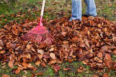 Räfsa inte bort löven – låt ligga, täck i rabatter och gör lövkompost