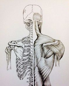 Reposting @royyalbae: < Anatomy >  Scientists divide my body into systems Cardiovascular, Circulatory, Respiratory, But when you are in my presence, It all becomes nervous  #anatomy #art #paint #ink #poetry #vibes #instagood #inspiration #science #body #nervous #life #illustration #skeleton #science #muscle #love