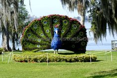33 Best Winter Haven Fl Home Sweet Home Images Winter