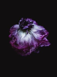 Decaying flower was shot by Billy Kidd.