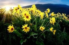 Kekuli Bay Provincial Park Sunrise – Peter Jobbins