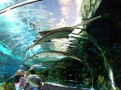 Chattanooga aquarium in Tennessee. This is where we used to go when we were kids!