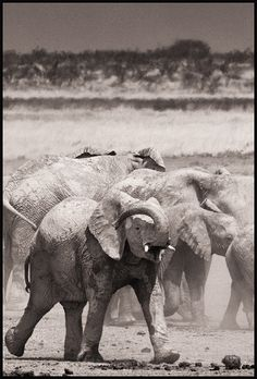 Pictures taken across Africa and Asia by John Kenny