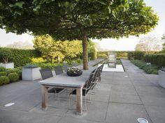 Concrete table built around tree