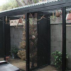Keep Pet Birds Outdoors Safely