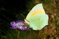 Butterflies in Freedom XXXVIII by Juan Dorado on 500px