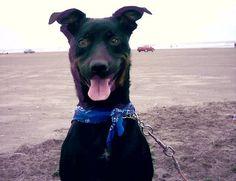 Beamer at the beach in Ocean Shores,WA