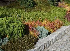 wrzosowisko na skarpie w ogrodzie przydomowym projektu autorstwa: PracowniaOkaz