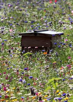 bee hive + wildflowers | http://www.dailymail.co.uk/news/article-2022610/One-couple-57-flowers-Somerset-meadow-turned-field-dreams.html