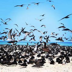 #greatbarrierreef #michaelmascay #cairns #queensland #australia #birds by fcdo1987 http://ift.tt/1UokkV2