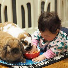 うさぎさんのおやつにんじんを漁る娘 楽しそう ・ ・ ・ ・  #赤ちゃん #ベビー #かわいい #肉 #女の子 #生後8ヶ月#0歳 #baby #babygirl #cute #育児 #子育て#babystagram #子供 #うさぎ #ロップイヤー #rabbit #rabbitstagram #bunny #ペット #bunbun #pet #pets #petstagram