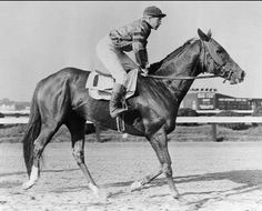Whirlaway before winning the 1941 Preakness Stakes.