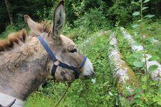 Wandelen met een ezel, een dagtocht met kinderen!