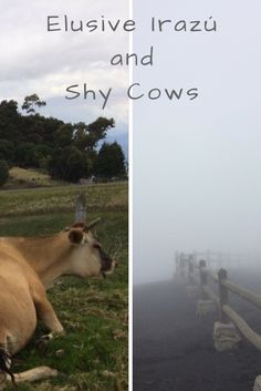 Photo essay: a day in the Central Valley of Costa Rica in June.  Some strange things happen in the wet season. We went to see a volcano expecting to find a crater(s), a lava flow(s), a desolated land… Instead, we found bucolic landscapes filled with lush greenery, misty trees and shy cows.