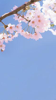 Spring Wallpaper, Lit Wallpaper, Cute Wallpaper Backgrounds, Pretty Wallpapers, Flower Backgrounds, Flower Background Wallpaper, Flower Phone Wallpaper, Pink Wallpaper Iphone, Iphone Wallpapers