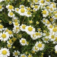 Nature's Gift | Aromatherapy Products | Chamomile, Roman, France Essential Oil