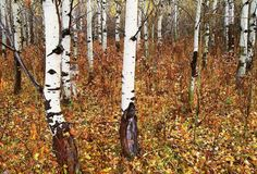 19 perfectly camouflaged animal photos. Can you find the wolf? #biology #camouflage #adaptation
