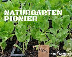 Hans Weiss vom Steinschalerhof ist der Naturgarten Pionier unter den Naturidyll Hotels Hotels, Herbs, Natural Garden, Herb, Medicinal Plants