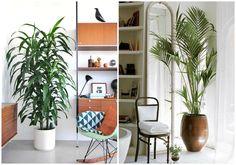 Decorar con plantas en casa | Decorar tu casa es facilisimo.com