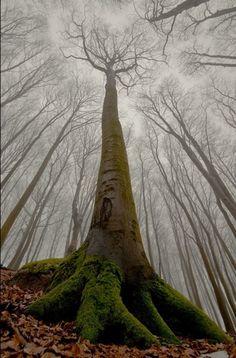 Buena perspectiva para un árbol