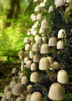 Mushrooms: maintainers of the world. Recycling rotting organic material for other plants and animals, keeping nearly all the terrain on the planet stable and strong, and producing carbon dioxide for plants to breathe. Serious bad-asses.