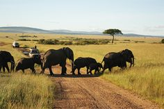 #KenyaSafari are a wonderful way to enjoy a refreshing vacation by connecting with nature and getting as close as possible with the pristine beauty that wild life offers. Check out more @ http://www.kenya-safaris.co/