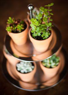 Eco-Friendly Centerpieces