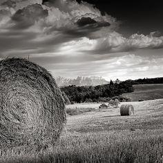 Golden Fields of Wheat