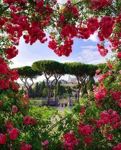 Rose garden in Rome, Italy #romantictraveldestinations #italyvacation