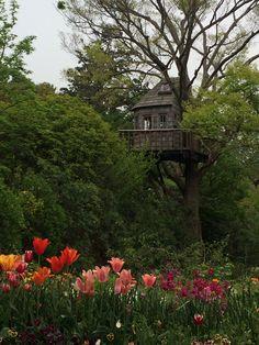 2014-04-29 ツリーハウス  鎌倉をトレッキング中に発見したツリーハウス♪  素敵〜♡